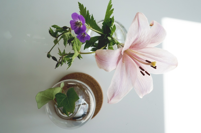 Sticklingen blev fin i sällskap av fina blommor.